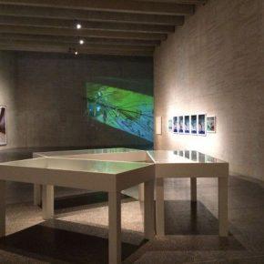 VISITA GUIADA: ARTISTA, MUSEO, ESPECTADOR
