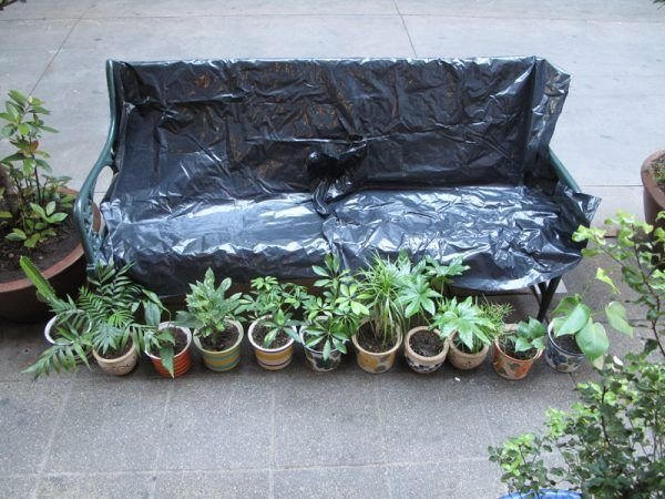 Bench-and-Plants