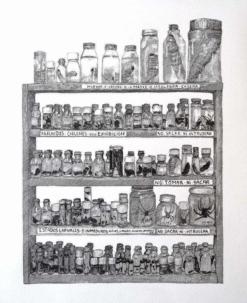 Rodrigo Arteaga, Gabinete de Entomología, 2016, tinta sobre papel, 60 x 40 cm. Cortesía de Sobering Galerie