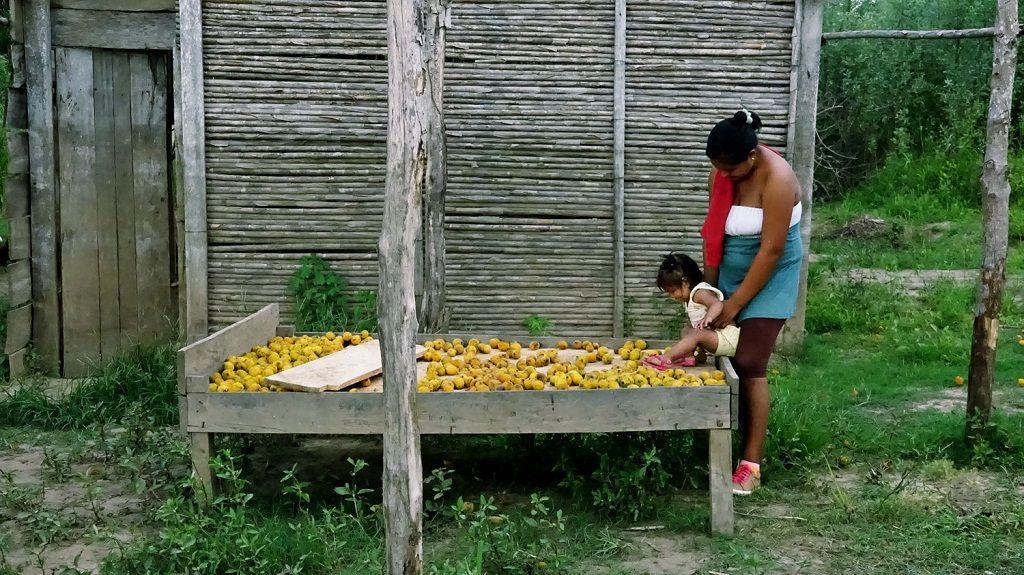Elkin Calderón (Colombia) Ocoró Catrera. Cama de madera y ocorós, 2014. Gentileza del artista.