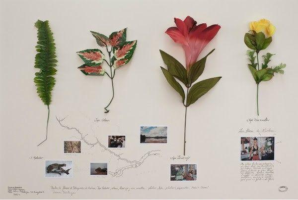 Alberto Baraya, Herbario de Plantas Artificiales. Cortesía del artista e Instituto de Visión, Bogotá