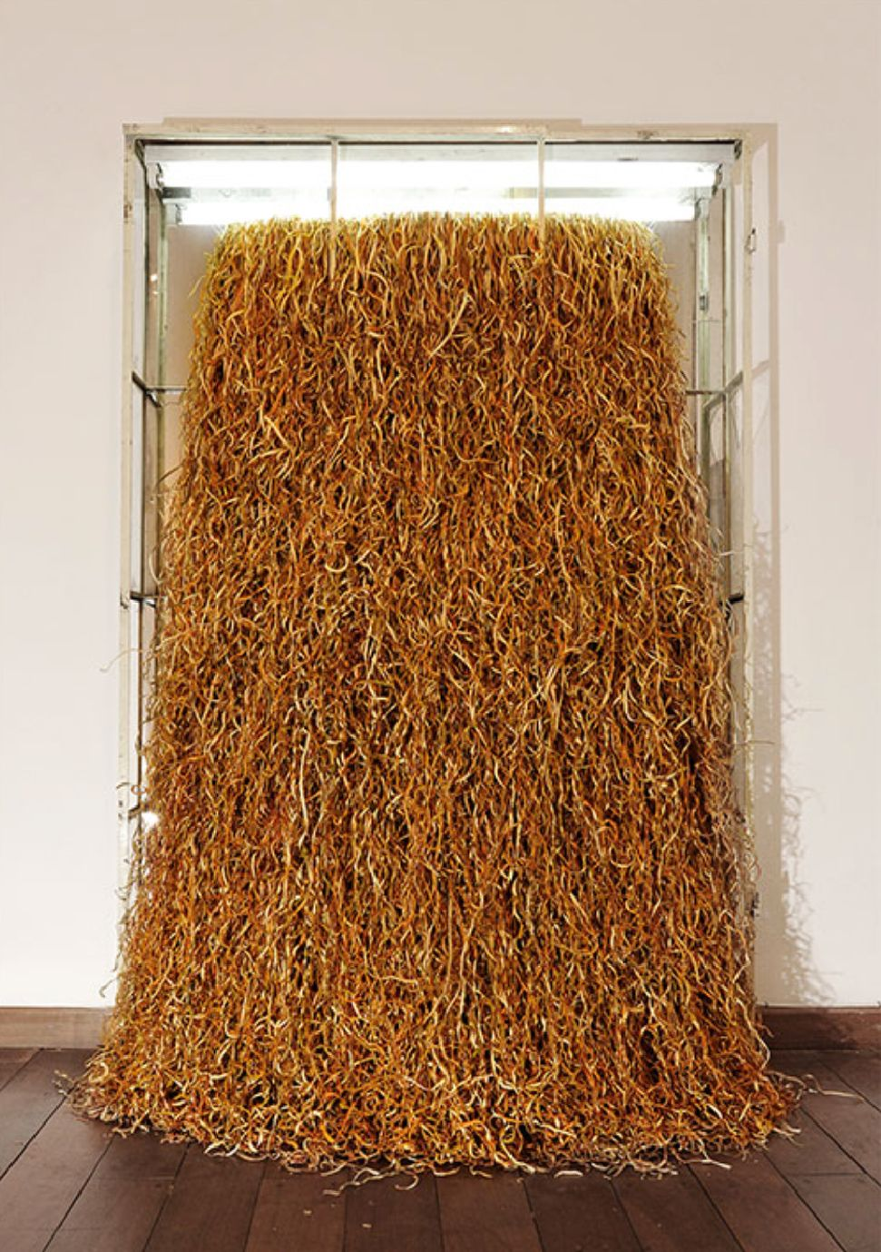 Andrés Bedoya, Sin título (naranjas), cáscaras de naranjas, vitrina. Cortesía: Galería Metales Pesados Visual, Santiago de Chile