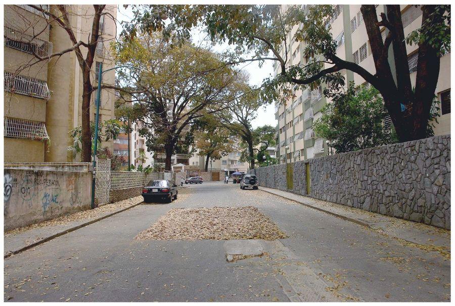 Oscar Abraham Pabón, Caracas Minimalista, 2009, hojas secas cubriendo un bache en la calle. Cortesía del artista