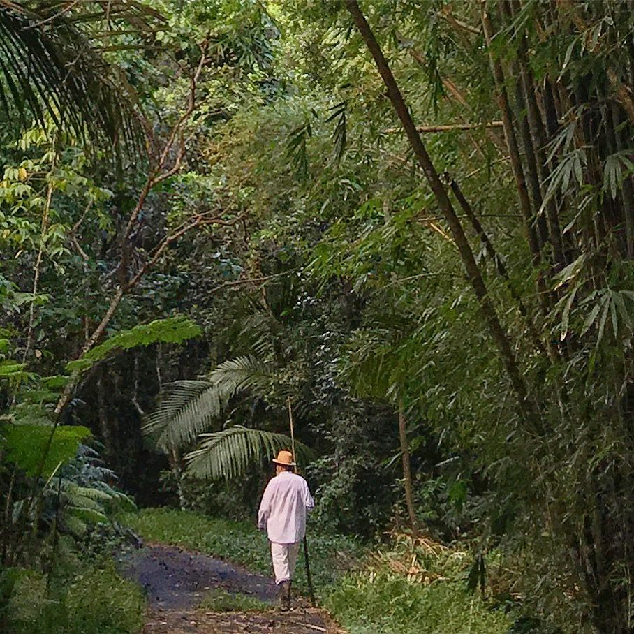 Papo Colo en El Yunque. Foto: Klaus Biesenbach