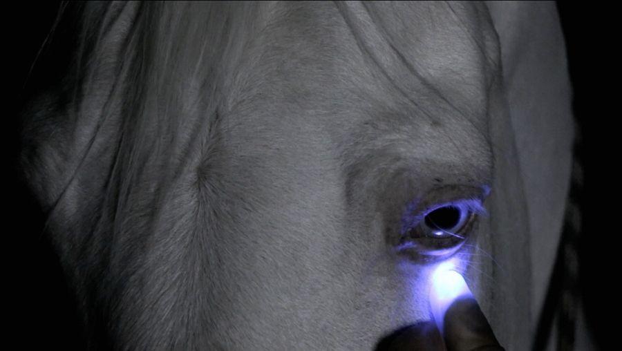 """Vista de la exposición """"Los ojos serán lo último en pixelearse"""", de Patricia Domínguez, en la Galería Patricia Ready, Santiago de Chile, 2016. Foto cortesía de la artista"""