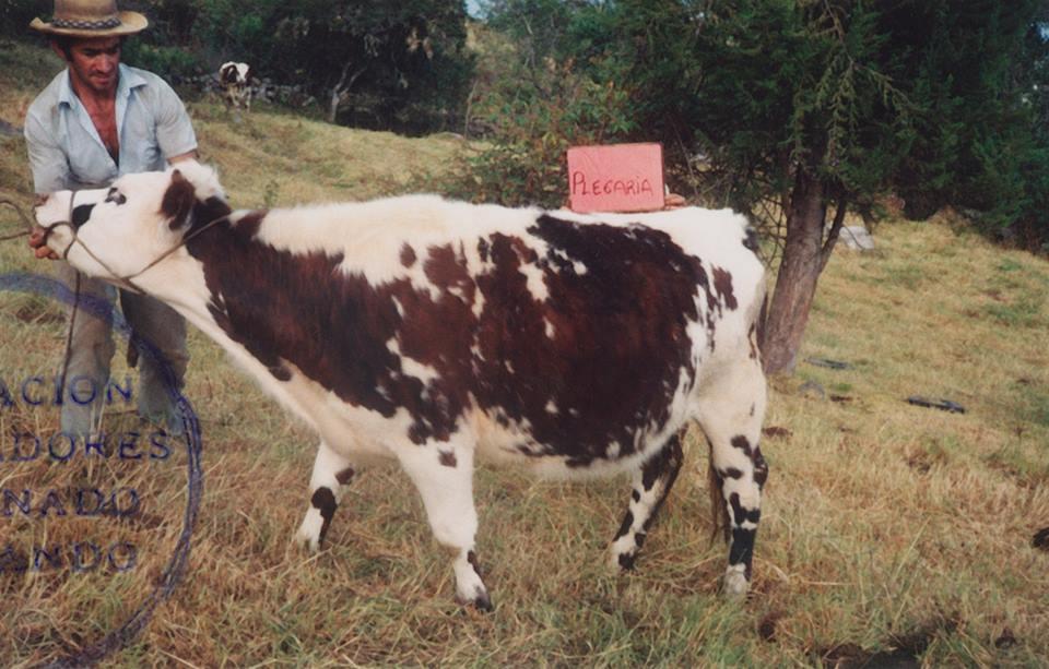 Fotógrafo anónimo, Concurso de Vacas, Colombia, años 80. Cortesía: Les Rencontres d'Arles