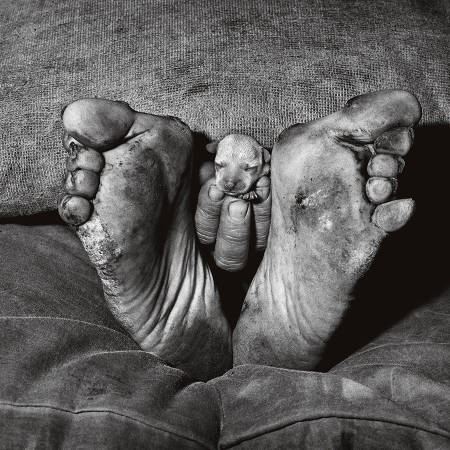 Puppy Between Feet (1999) © Roger Ballen. Foto: cortesía del artista.
