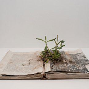 Rodrigo Arteaga, Alcances Botánicos, 2014, libros intervenidos con plantas, medidas variables.Foto: Bruno Giliberto