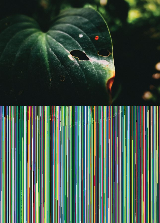 """Bichos de Jardín, de Ilich Castillo. Vista de la exposición """"Objeto Diferido"""",en el Centro de Arte Contemporáneo (CAC), Quito, 2017-2018. Cortesía del artista"""