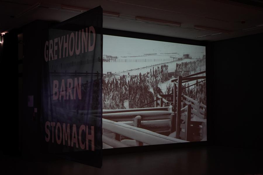 Nicolás Franco, Greyhound, Barn, Stomach, 2016, plotter de corte negro, dimensiones del tamaño de un muro (ej. 300 x 400 cm). Cortesía del artista