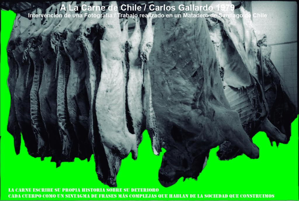 Carlos Gallardo, A La Carne De Chile, La Carne Escribe, 2017, fotografía analógica, 36 x 35 mm, slide a color, impresión con pigmentos minerales libres de ácidos sobre papel de algodón de 340 gr. prensado en frío, 110 × 165 cm. Cortesía: D21