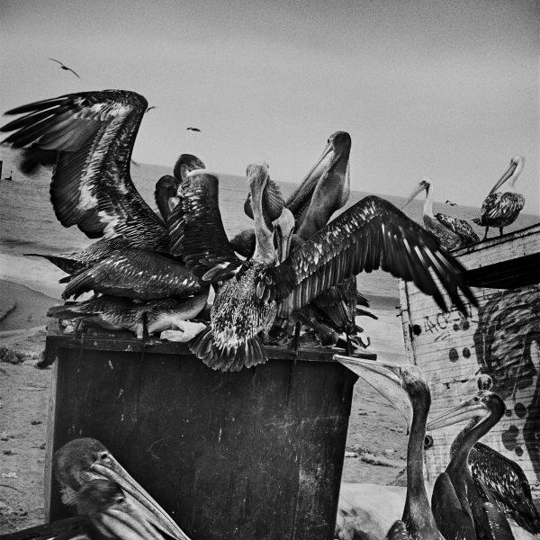 Anders Petersen, Valparaíso. Cortesía: Festival de Fotografía de Landskrona, Suecia, 2018