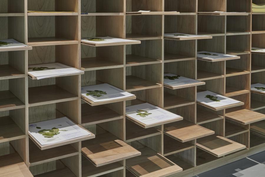 """Vista de la exposición """"Lecturas Botánicas: Erythroxylum coca"""", de Ximena Garrido-Lecca, en Proyecto AMIL, Lima, 2019. Foto: Juan Pablo Murrugarra. Cortesía de la artista y Proyecto AMIL"""