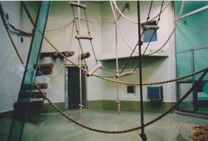 Bauhaus-for-Monkeys-4