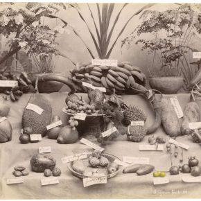 Tacita Dean. Singapore Fruits, 2016. Cortesía de la artista. Marian Goodman Gallery, New York, Paris y Frith Street Gallery, London