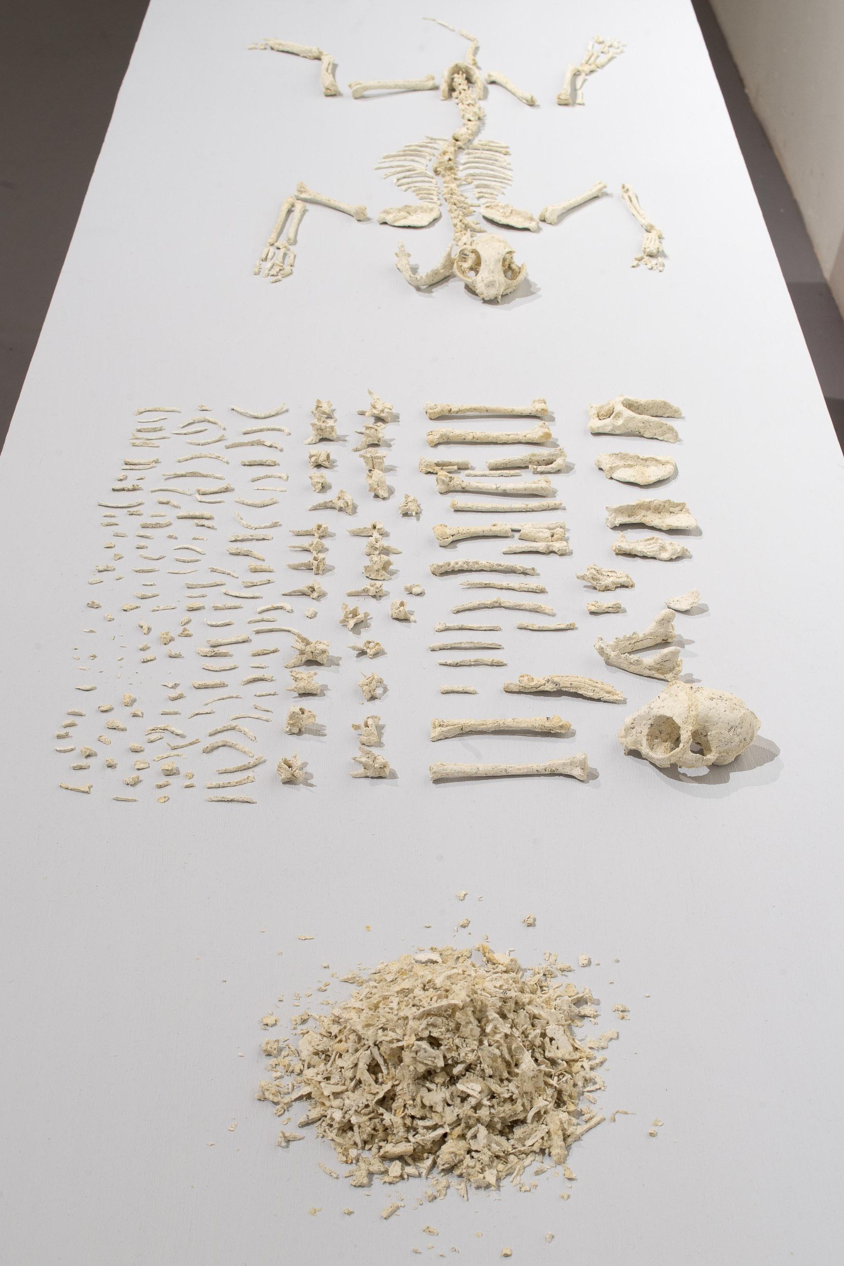 Rodrigo Arteaga, Practical Zoology: cat, mesa con esculturas de pepel tomado de un libro de zoología, 90 x 244 x 80 cm (mesa). Foto: Tomáš Souček