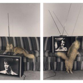 Victoria Cabezas, Gato y telenovela 2, 1983, copia en gelatina de plata coloreada manualmente, 20.3 x 25.3 cm. cada una. Cortesía de TEOR/éTica