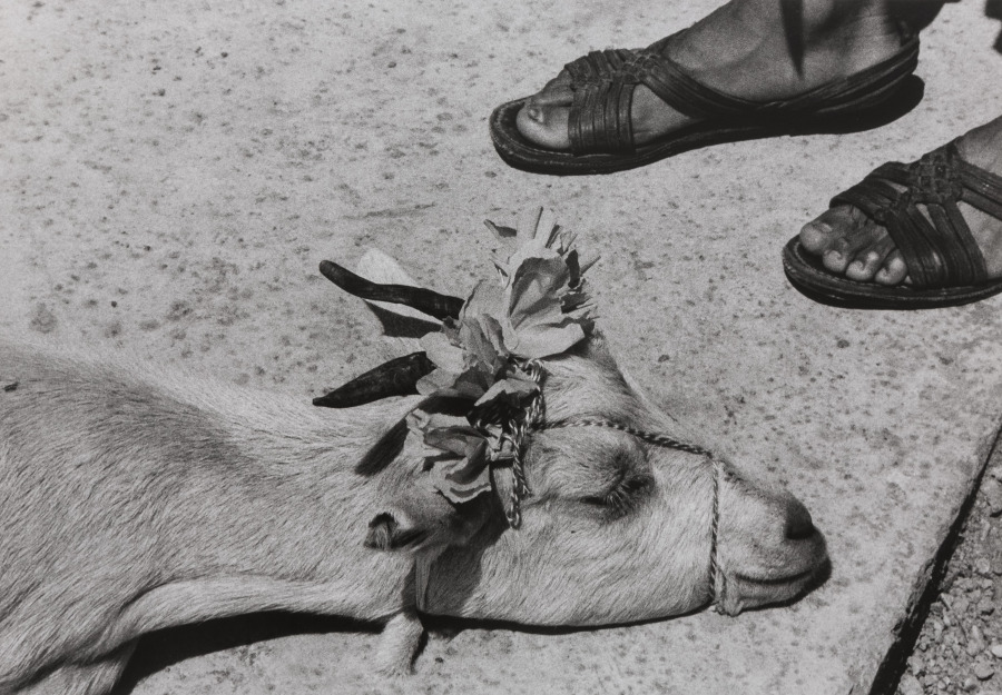 Graciela Iturbide, Antes de la Matanza, La Mixteca [El Baile/La Danza de la cabrita], 1992, fotografía, gelatina de plata. Adquisición del museo con fondos donados por John y Cynthia Reed, Charles H. Bayley Picture and Painting Fund, Barbara M. Marshall Fund, Lucy Dalbiac Luard Fund, Horace W. Goldsmith Foundation Fund for Photography, Francis Welch Fund, y Jane M. Rabb Fund for Film and Photography. © Graciela Iturbide. Cortesía: Museum of Fine Arts, Boston