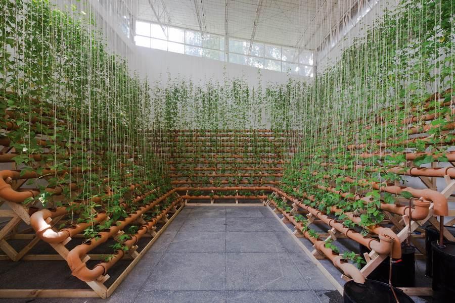 Ximena Garrido-Lecca, Insurgencias Botánicas: Phaseolus Lunatus, 2017. Vista de la instalación. Foto: Ramiro Chávez
