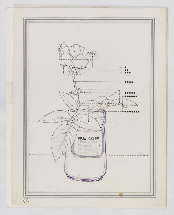 Roberto Obregón, Sin título (Diagrama de la Rosa Canina), 1976. Dibujo en tinta, grafito y emulsión para transferencia sobre papel. © Archivo Roberto Obregón
