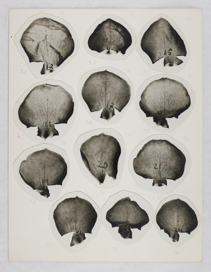 Roberto Obregón, Sin título, 1976 (detalle). Collage. Fotografías recortadas adheridas a papel, lápiz (tres folios). © Archivo Roberto Obregón