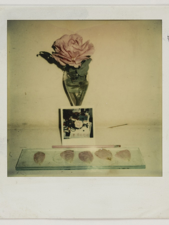 Roberto Obregón, Sin título (estudio para disección), c. 1974. Polaroid. © Archivo Roberto Obregón
