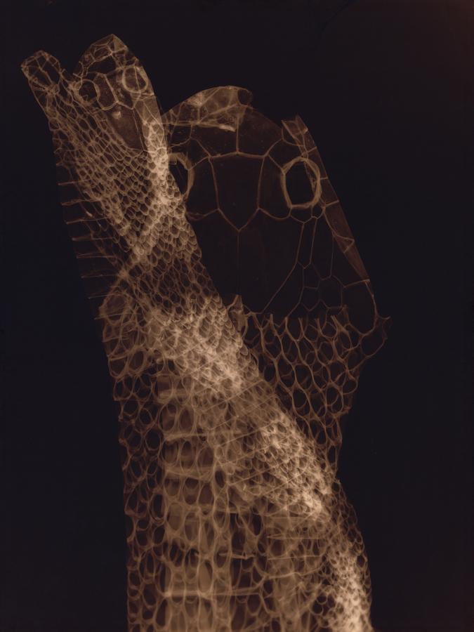 Lucía Pizzani, Todopoderosa, 2019, impresión a color a partir de fotograma, 100 x 75 cm. Edición de 3. Foto: Eva Herzog. Cortesía: Cecilia Brunson Projects, Londres